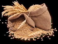 Mahe (öko) teraviljad